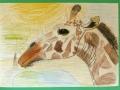 Žirafa Jana Mrkosová, 10 let Zvíře dle přinesené předlohy